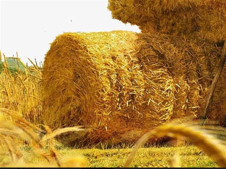 البترول: إنتاج ألواح خشبية من قش الأرز  باستثمارات مصرية 210 ملايين يورو