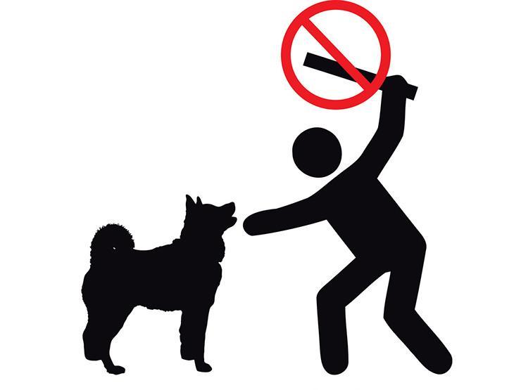 """بعد تداوله عبر الـ""""فيس بوك"""".. ضبط مرتكب واقعة التعدي على كلب بالسيدة زينب"""