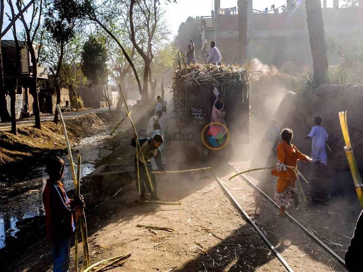 صورة وحكاية (4) في الصعيد الجواني.. مغامرة الأطفال مع قطار القصب