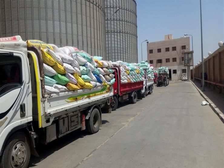 غلق باب توريد القمح في سوهاج بإجمالي 141 طنًا