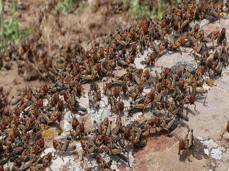 أسراب من الحشرات تجتاح لبنان بسبب الطقس الحار