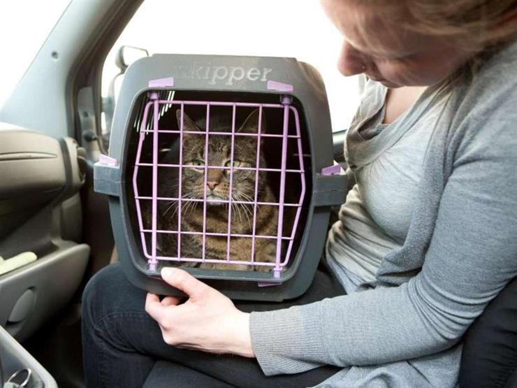 ما الطريقة الصحيحة لاصطحاب الحيوانات الأليفة في السيارة؟