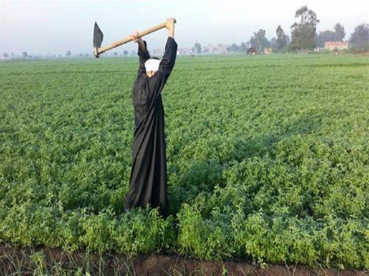 كيف أثرت أزمة كورونا على القطاع الزراعي ودخل الفلاحين في مصر؟