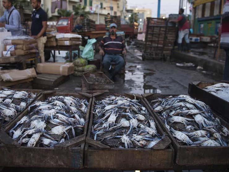 غدًا.. التموين تطرح كميات من الأسماك الطازجة والمجمدة بأسعار مخفضة