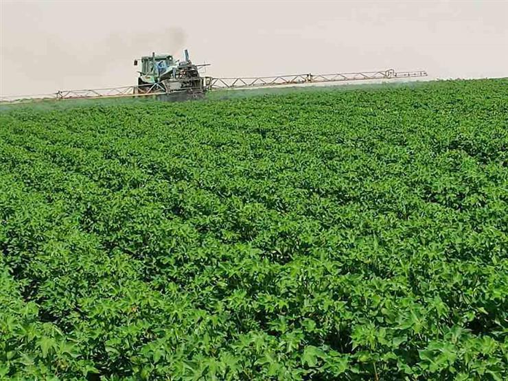 توفيق لمصراوي: تجربة زراعة قطن قصير التيلة في العوينات وتقييمها في أكتوبر