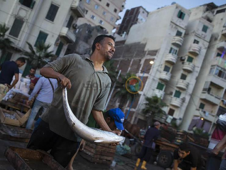 ارتفاع البلطي والبوري.. أسعار الأسماك في سوق العبور اليوم