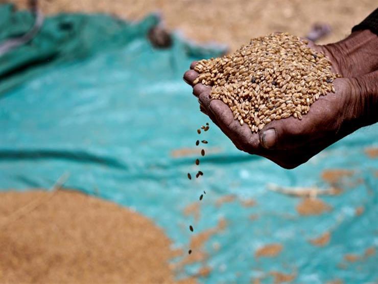 تقرير أمريكي يتوقع انخفاض واردات مصر من القمح إلى 13 مليون طن في الموسم الجديد