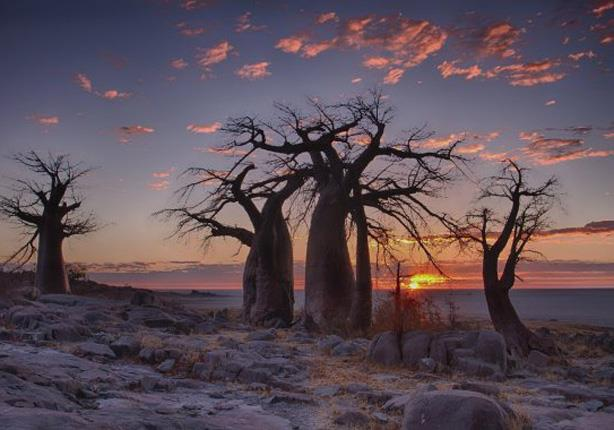 بوتسوانا copy