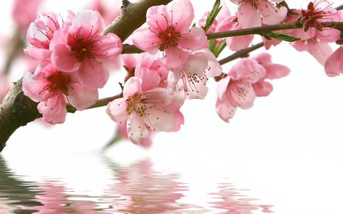 رائحة الأزهار