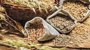 الشعير والحبوب الكاملة الأخرى