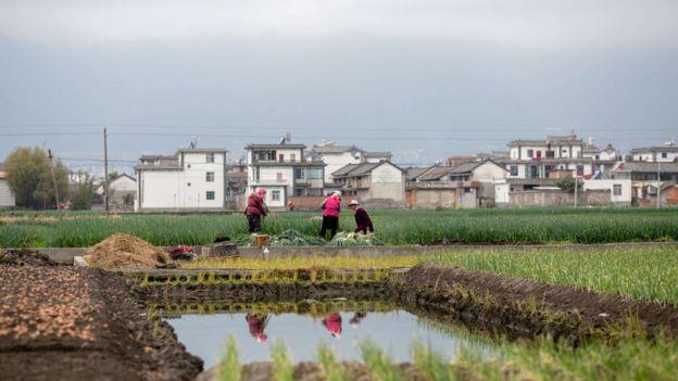 الصين سجلت تراجعا كبيرا في أعداد نساء الريف المنتحرات خلال العقد الماضي