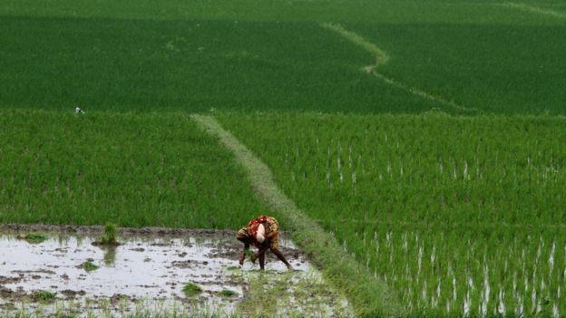 دراسة تقول إن 66.7% من النساء في مقاطعة ساندربانز في الهند استخدمن مبيدات للإضرار بأنفسهن