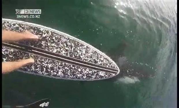 فيديو: عندما تسبح بجانب حوت الأوركا القاتل قرب الشاطئ