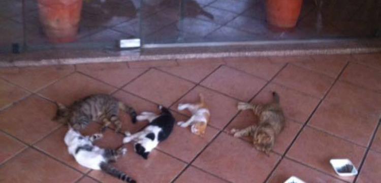 عدد من القطط التي تم تخديرها في الأهلي