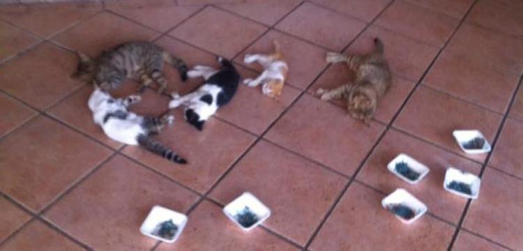 مذبحة القطط داخل الاهلي