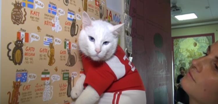 """القط أخيل.. بين توقعات الأخطبوط بول الصائبة.. وخيبة أمل """"البيج هيد"""""""