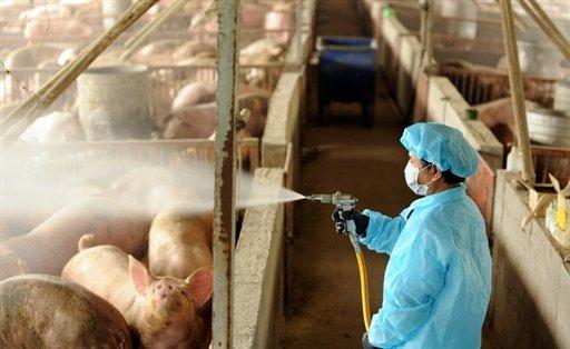 البرلمان يطالب بإعدام الخنازير فورا .. وصحف تتحدث عن (اياد خفية) تمنع نقل الحظائر خارج الكتل السكنية Photo_1240824890229-1-0