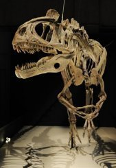 دراسة تعيد النظر في نظرية النيزك الذي تسبب بانقراض الديناصورات
