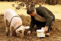 انفلونزا الخنازير،طرق انتقال انفلونزا الخنازير،الوقاية من انفلونزا الخنازير photo_1240570146654-