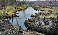 الانواع الحيوانية والنباتية صراع التغير المناخي