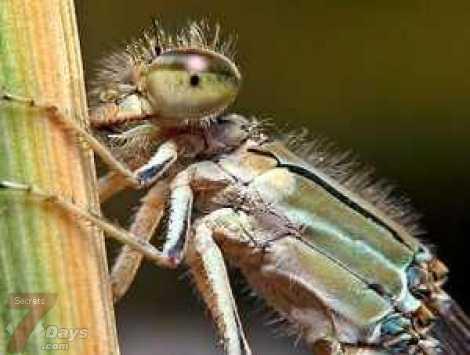 حشرة تجلب الملايين لمصر .. ممنوع قتلها L_1932992a7d.jpg