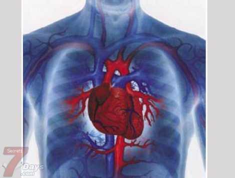 فيروس سرطان عنق الرحم يزيد مخاطر أمراض القلب